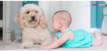 Dítě a zvíře v jedné domácnosti
